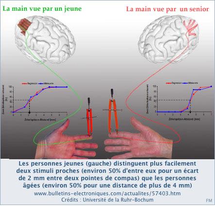 Le cerveau chez les personnes âgées