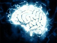 Comment le cerveau apprend ?