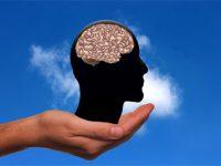 Intelligence et taille du cerveau