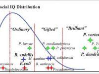 Qi et la mesure l'intelligence
