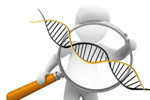 Quelle influence de la génétique sur nos capacités et nos aptitudes ?