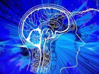 Cerveau : quelles fausses croyances ? Quelles applications concrètes dans l'éducation et la pédagogie